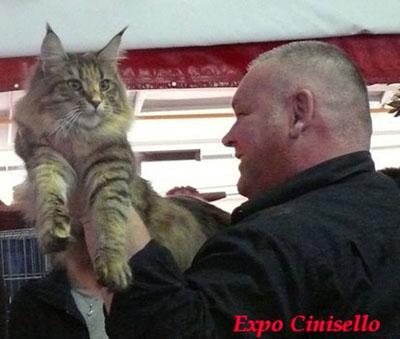 n-22-expo-cinisello-jpg