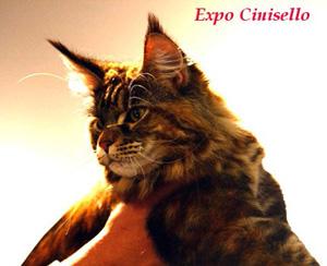 20-expo-cinisello